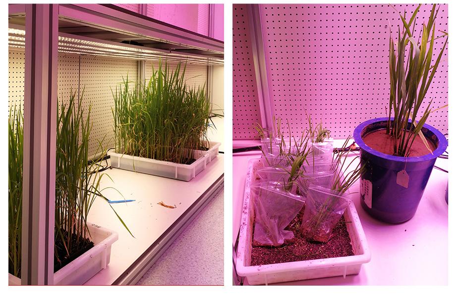 植物全生育期空气处理机组_09